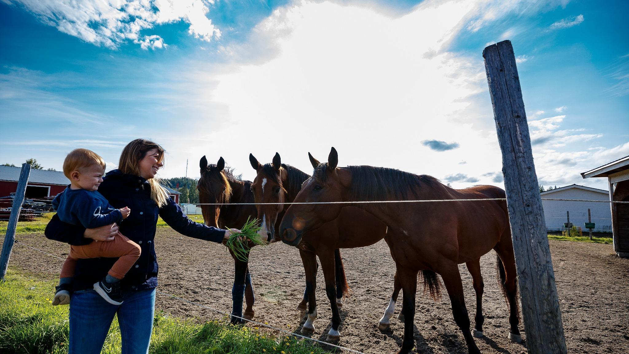 kvinna med barn på höften matar tre bruna hästar med gräs