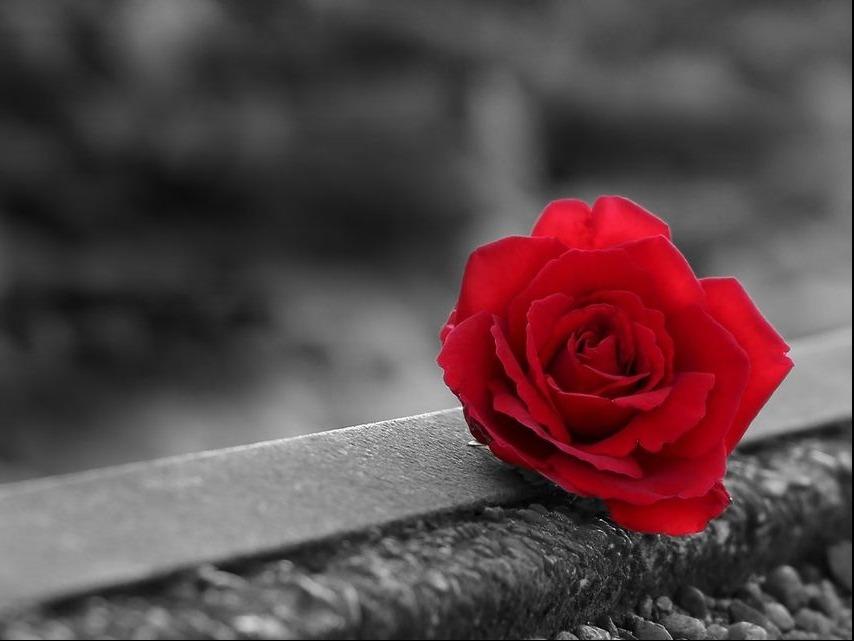 Till minne av förintelsens offer