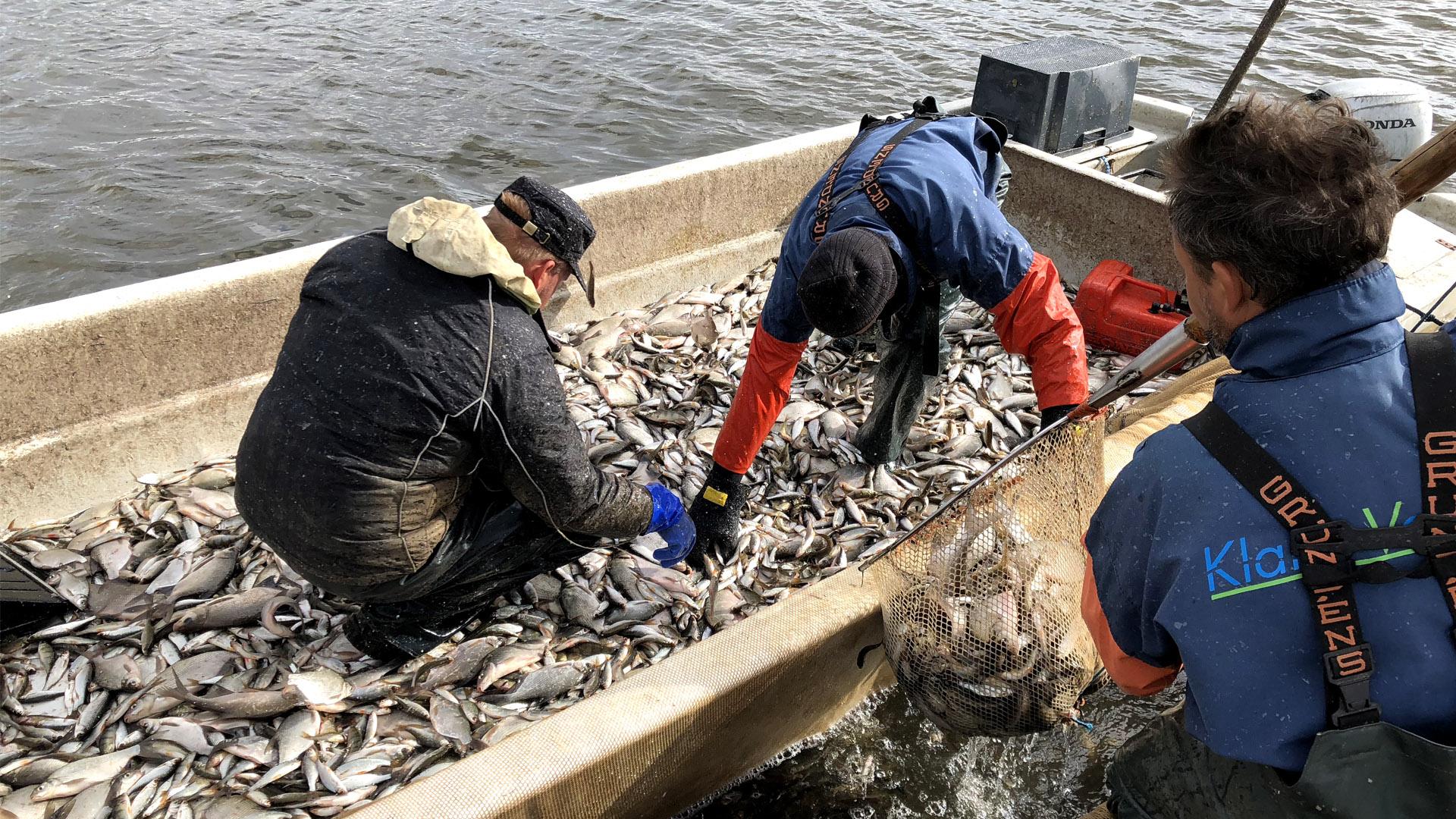 Fortsatta åtgärder i kampen mot alger
