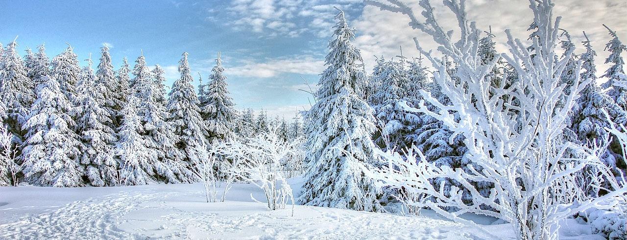 Vinterlandskap/snö