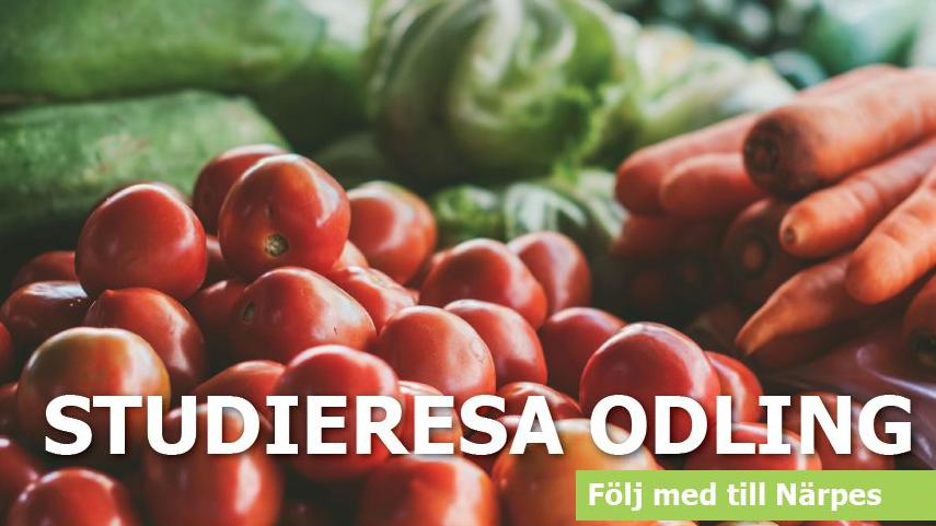 Bild på grönsaker med texten: Studieresa odling, följ med till Närpes.