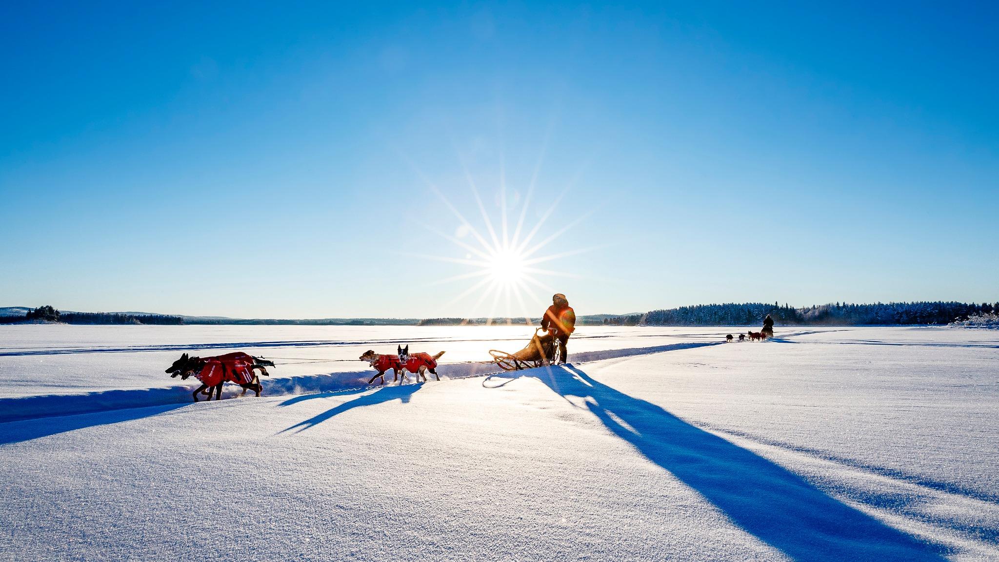 Hundspannstud i vintersol med Northern Soul Journeys, det vill säga Hannah Levy och Jeremias Kinnunen